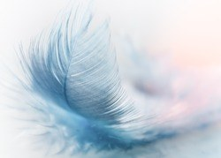 small blue feather