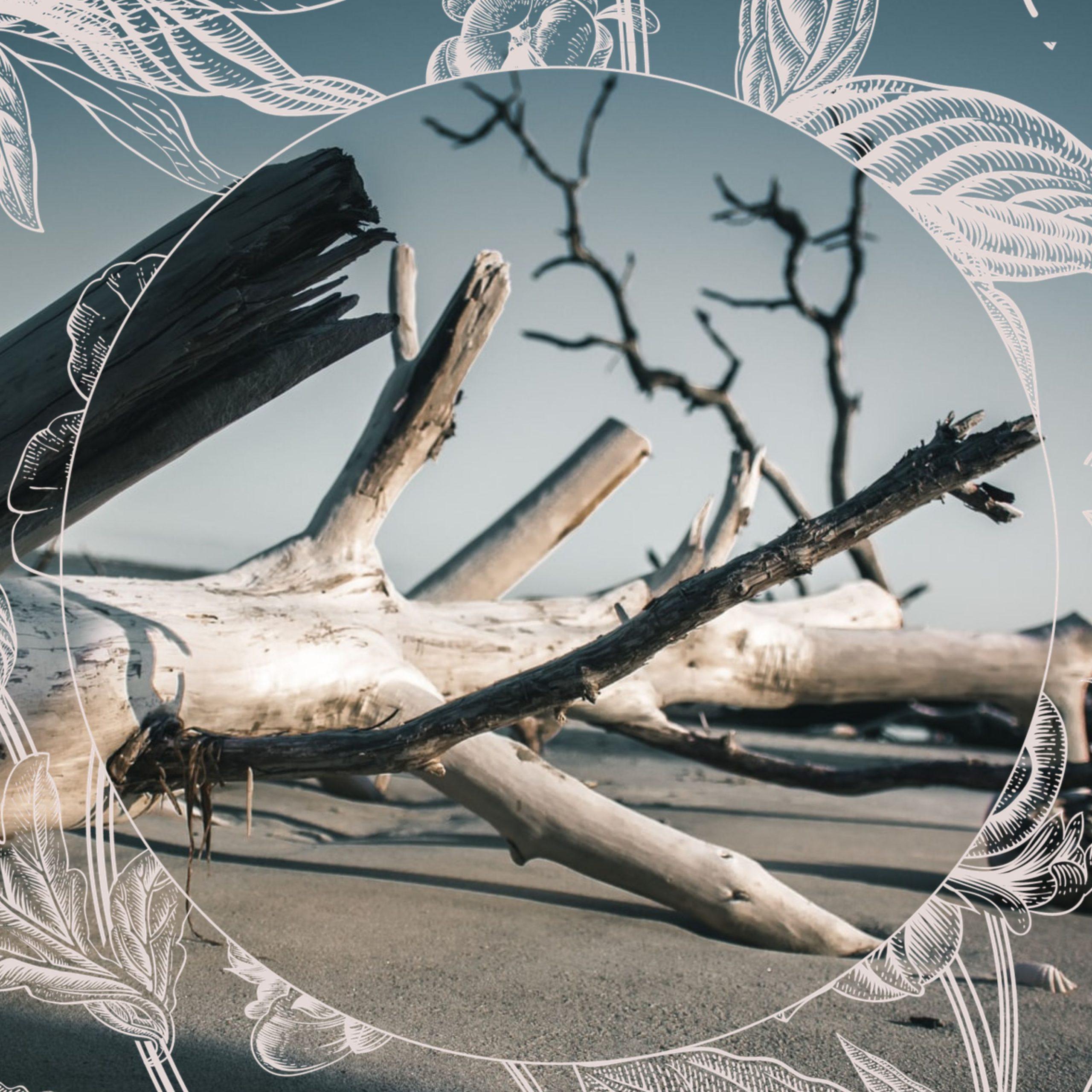 Fallen tree that resembles a bone